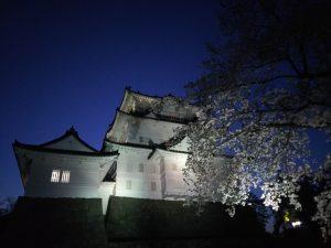 小田原城桜夜