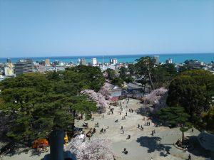 小田原城桜3