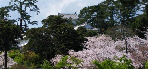 小田原城桜7