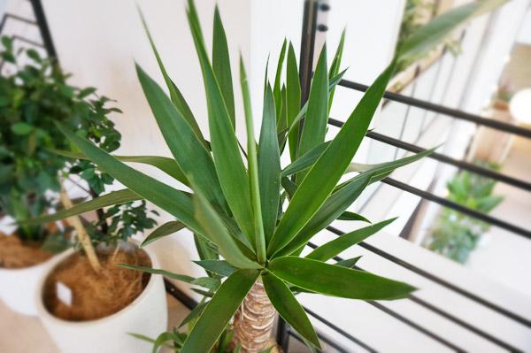 成長や成功の運気をアップさせるには「葉の先が尖った植物」を選ぶ