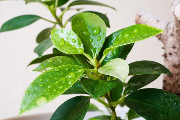 人間関係の運気をアップさせるには「葉が丸い植物」を選ぶ