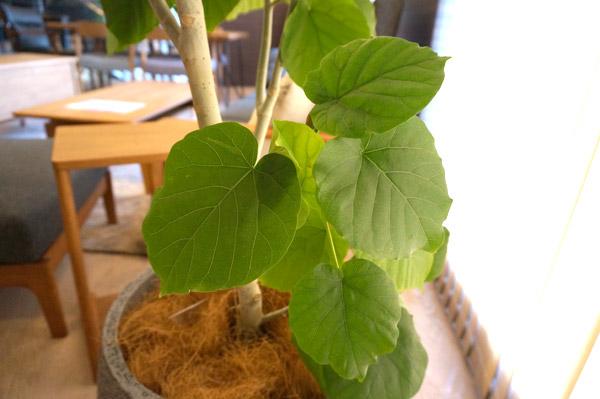 恋愛運をアップさせる「葉がハートの形をした植物」とは