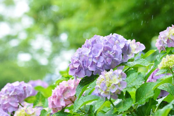 梅雨から夏はダニの大繁殖注意報!アレルギー対策が必要